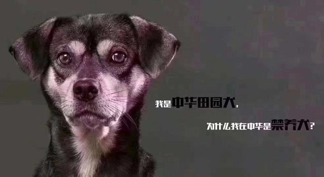 2019年国考热点解析:杭州史上最严养狗令,你怎么看?